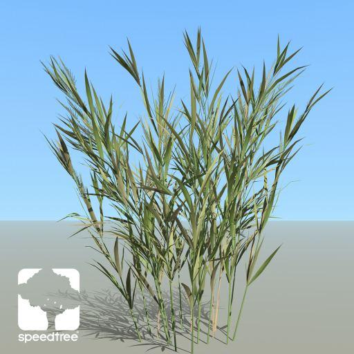 Wheat_Desktop_summerST
