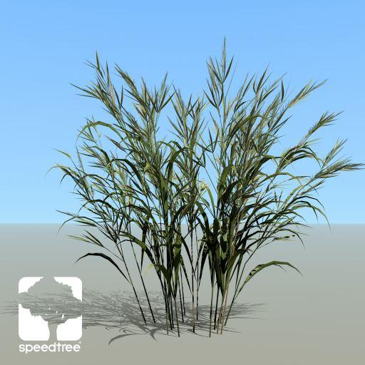 Wheat_hero_summerST