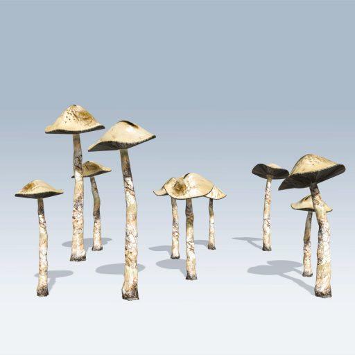 Common Mushroom (v6) 1