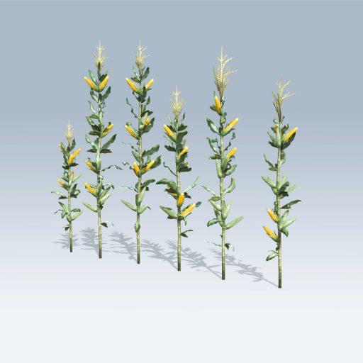 Corn Stalk (v6) 1
