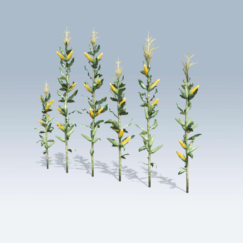Corn Stalk (v6) – SpeedTree Store
