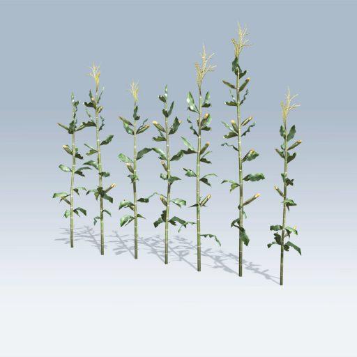 Corn Stalk (v6) 2