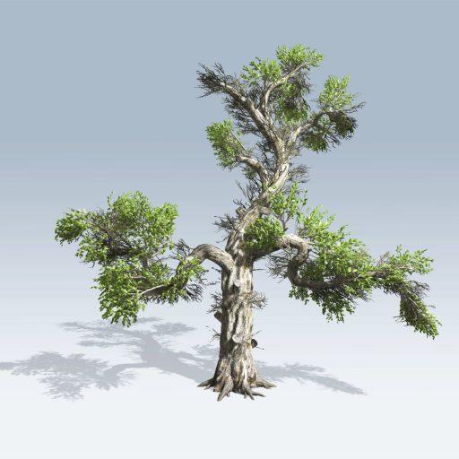Honey Tree (v6) 1