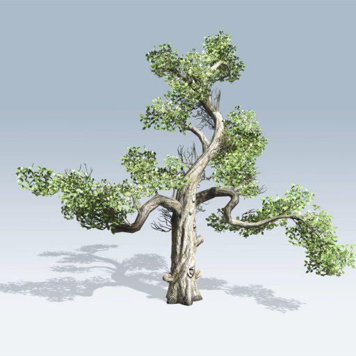 Honey Tree (v6) 2