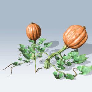 Pumpkin Vine (v6)