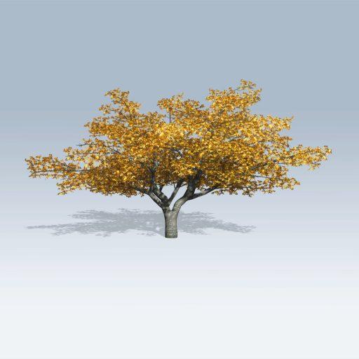 Cherry Tree (v6)
