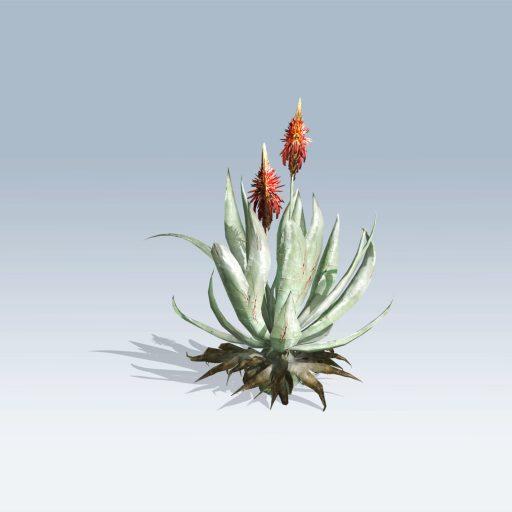 Aloe Vera (v6) 2