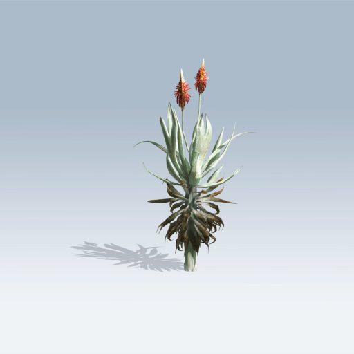 Aloe Vera (v6) 3