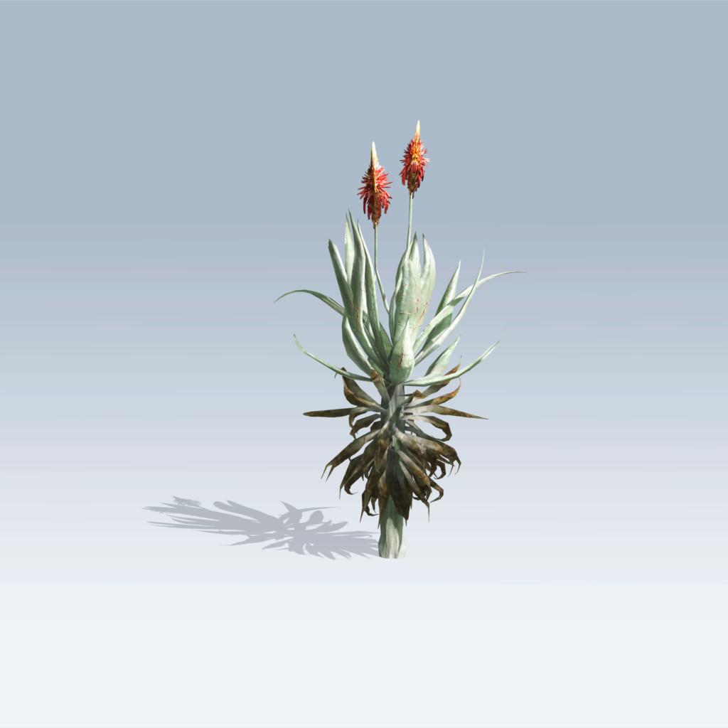 Aloe Vera (v6)
