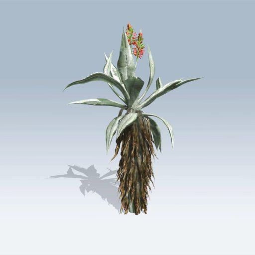 Aloe Vera (v6) 4