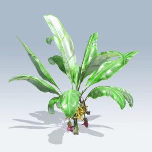 Banana Plant (v6)