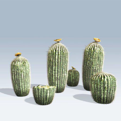 Barrel Cactus (v6) 2
