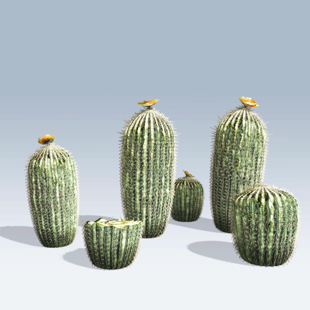 Barrel Cactus (v6)