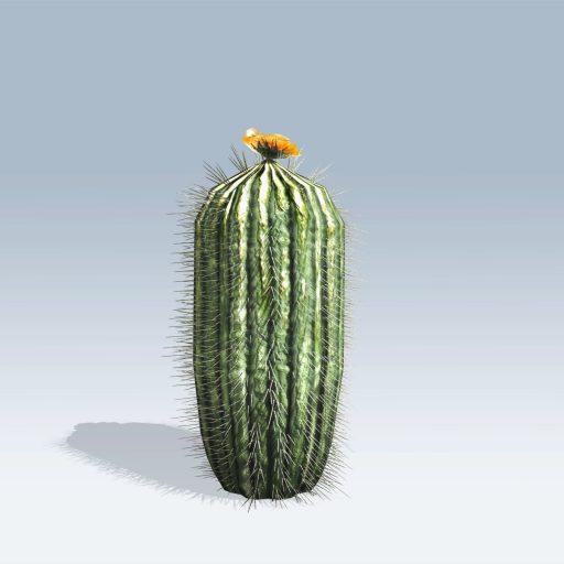 Barrel Cactus (v6) 3