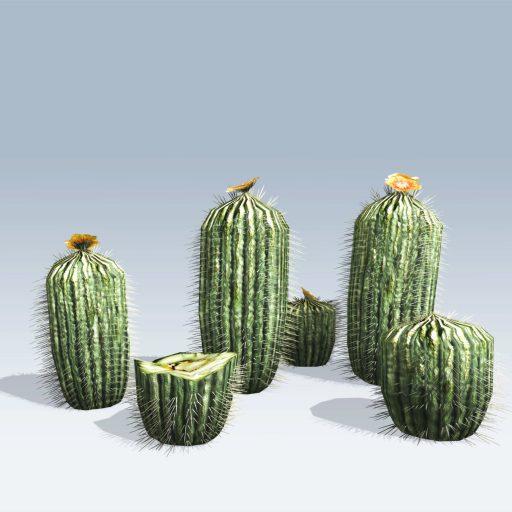 Barrel Cactus (v6) 4