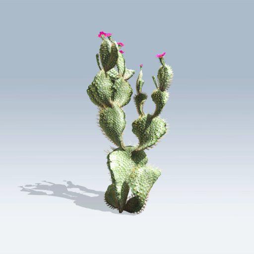 Beavertail Cactus (v6) 1