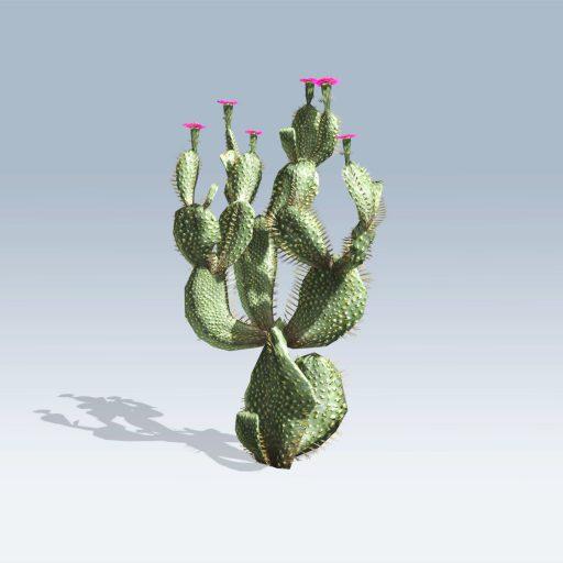 Beavertail Cactus (v6) 2