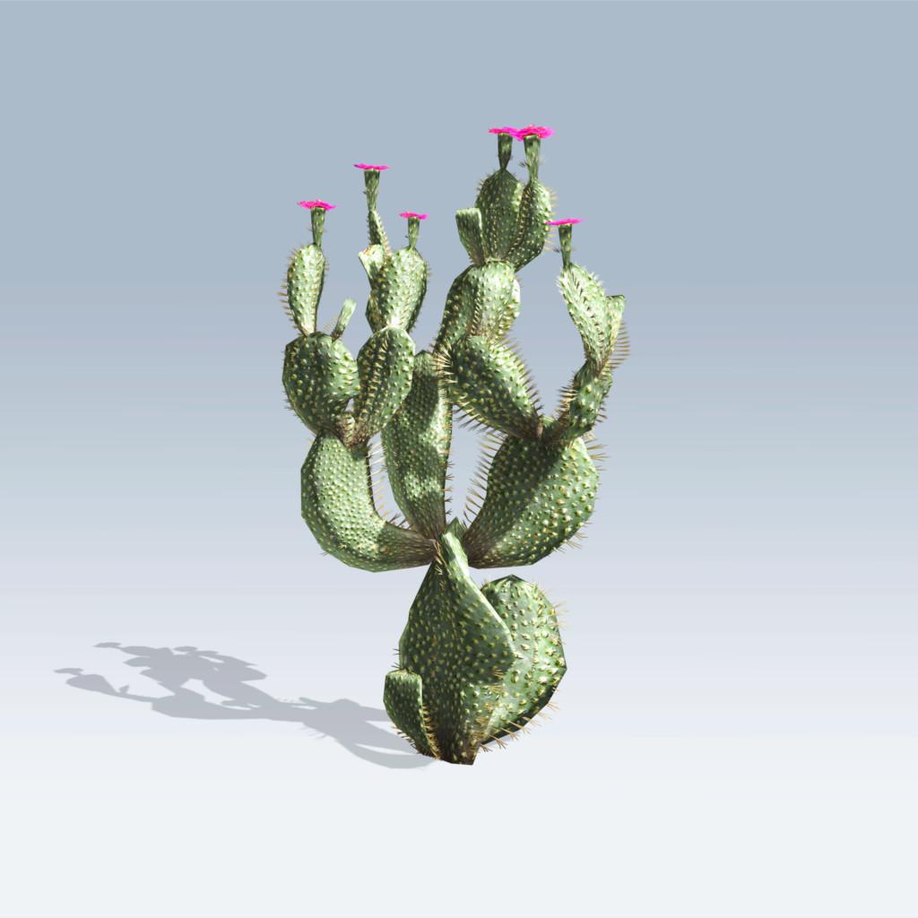 Beavertail Cactus (v6)