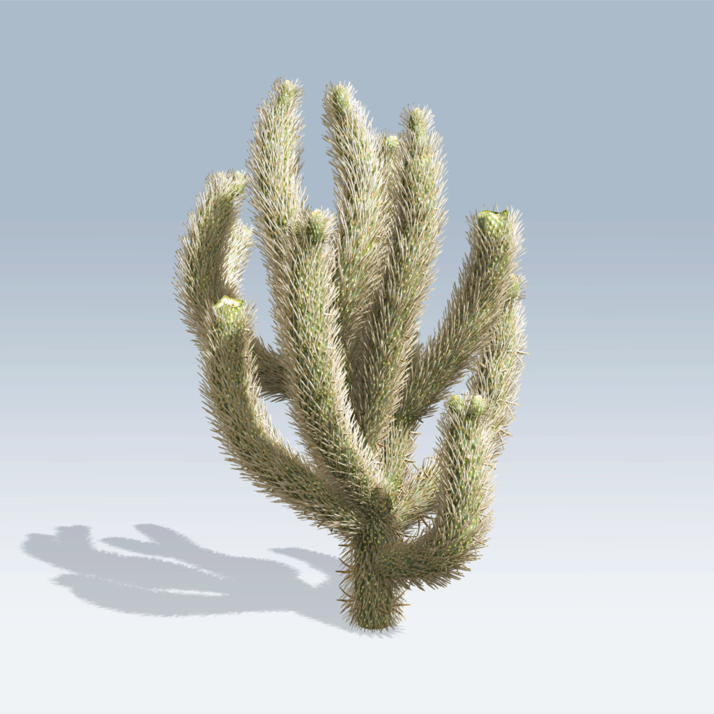 Cholla Cactus (v6)