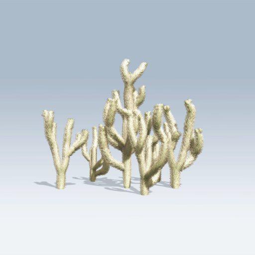 Cholla Cactus (v6) 2
