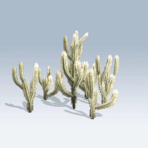 Cholla Cactus (v6) 3