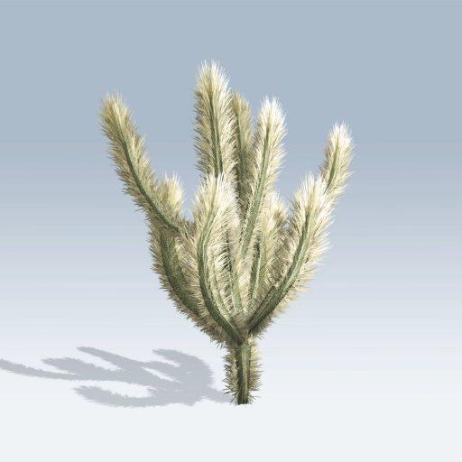 Cholla Cactus (v6) 4