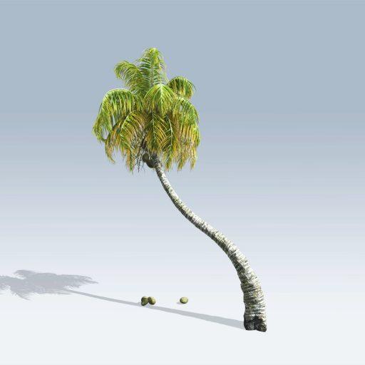 Coconut Palm (v6) 1