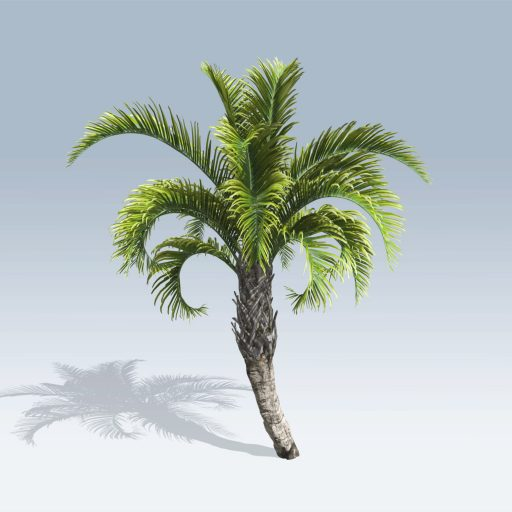 Curly Palm (v6)