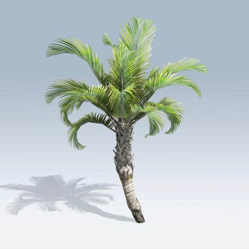 Curly Palm (v6) 2