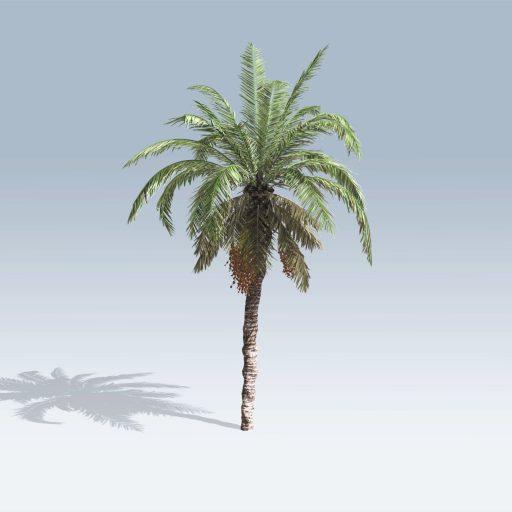 Date Palm (v6) 1