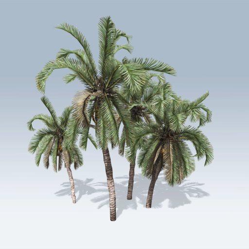 Date Palm (v6)