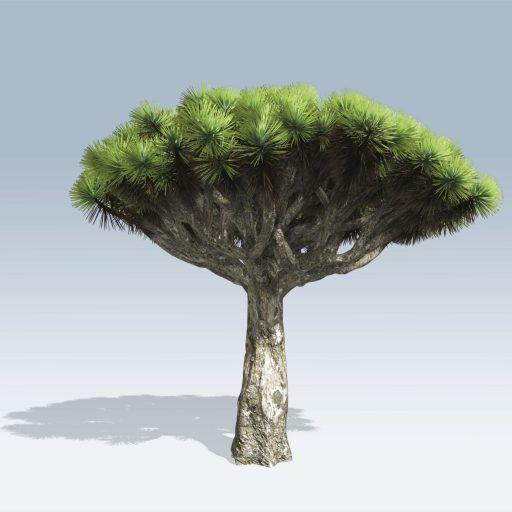 Dragon Tree (v6) 1