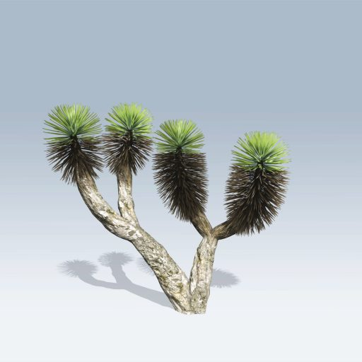 Dragon Tree (v6)