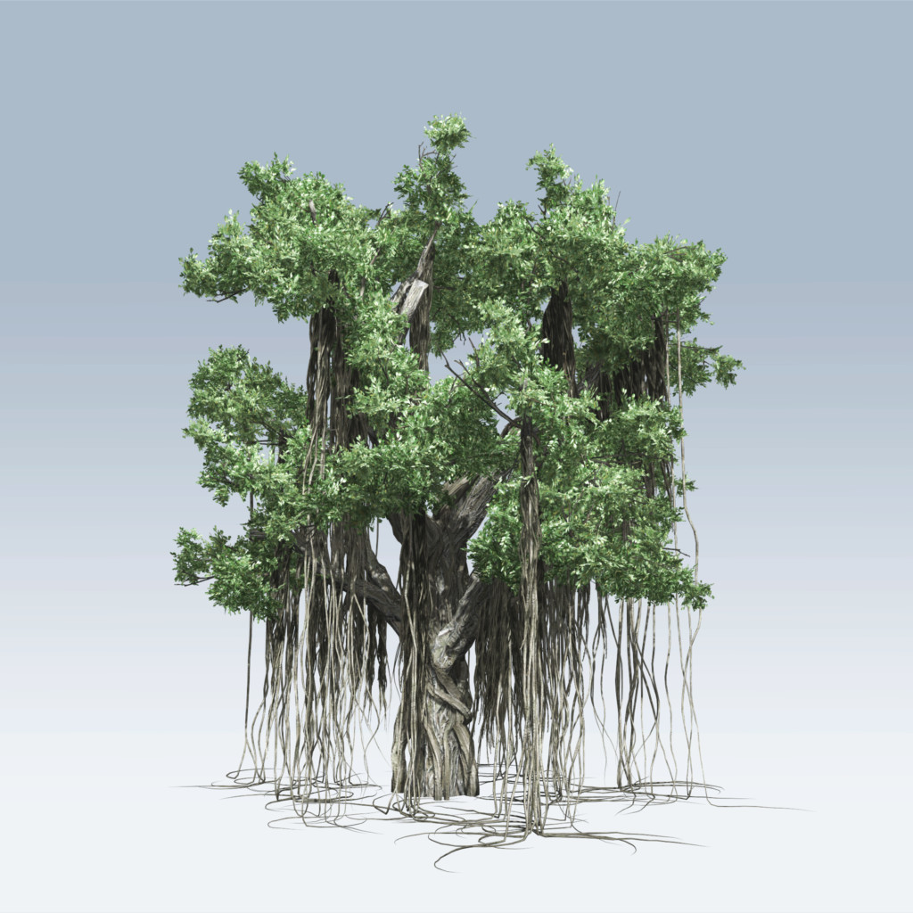 the banyan tree A banyan, also spelled banian, is a fig that begins its life as an epiphyte, i e a plant that grows on another plant, when its seed germinates in a crack or.