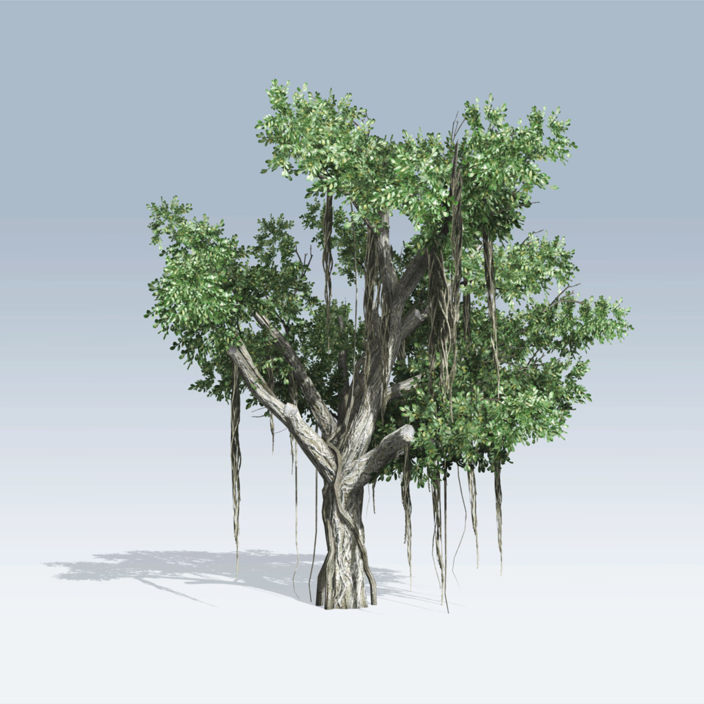 Chinese Banyan Tree (v6)