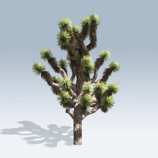 Joshua Tree (v6) 1