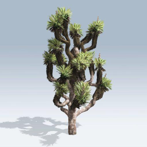 Joshua Tree (v6) 2