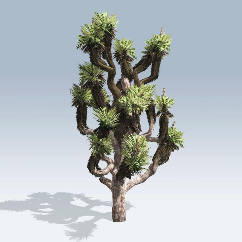 Joshua Tree (v6)