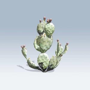 Prickly Pear Cactus (v6)