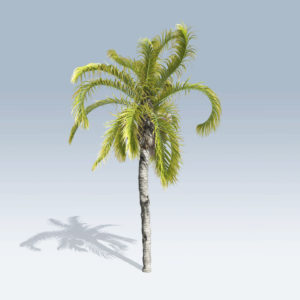 Queen Palm (v6)