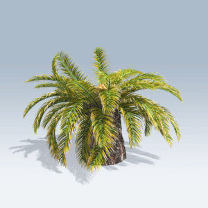 Sago Palm (v6)
