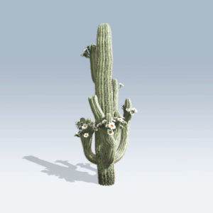 Saguaro Cactus (v6)