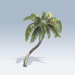 Sample Palm (v6)