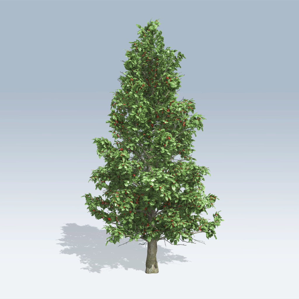 American holly v6 speedtree for Holl image