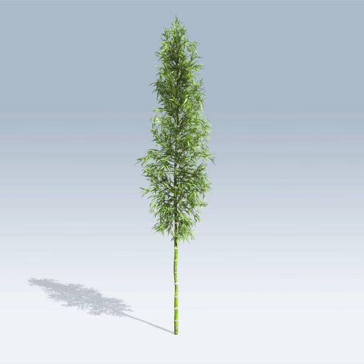 Bamboo (v6) 1