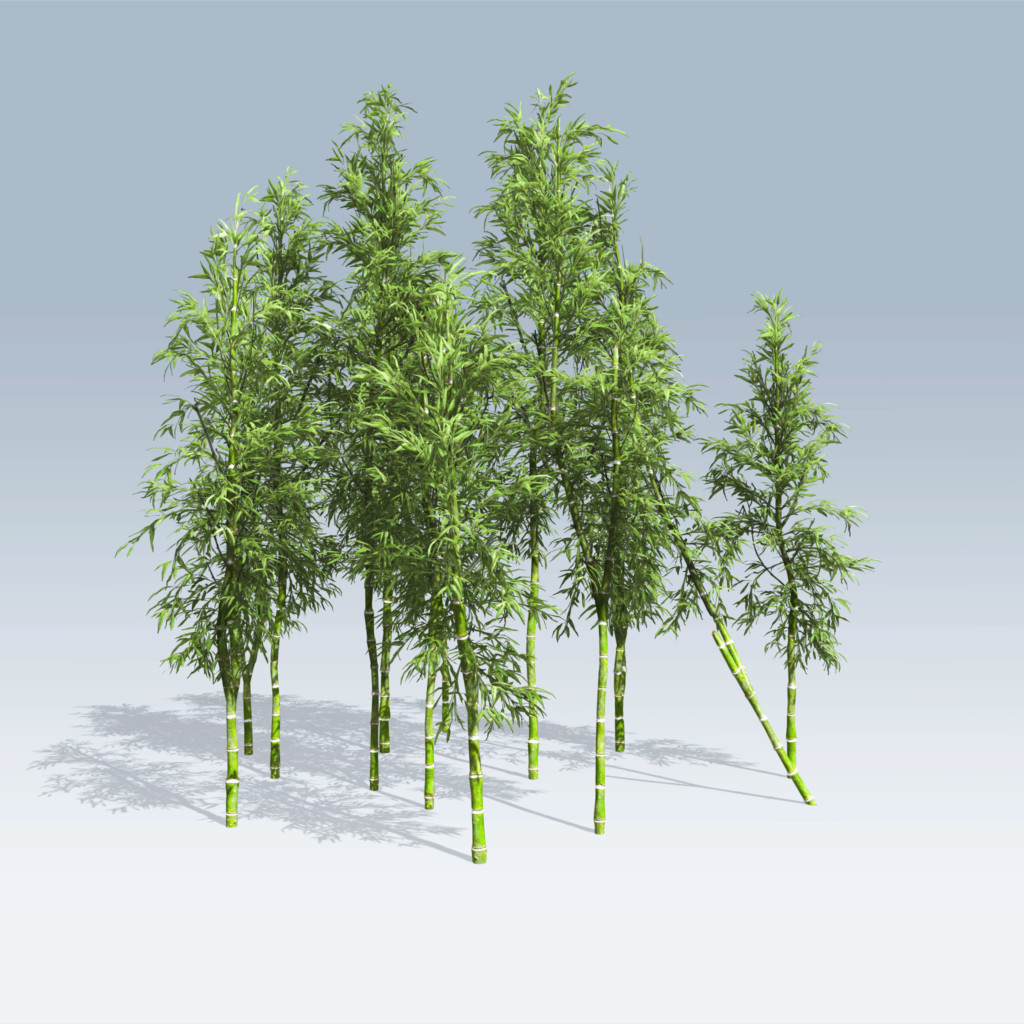 Bamboo (v6) - SpeedTree