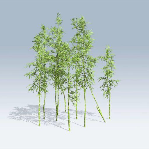 Bamboo (v6)