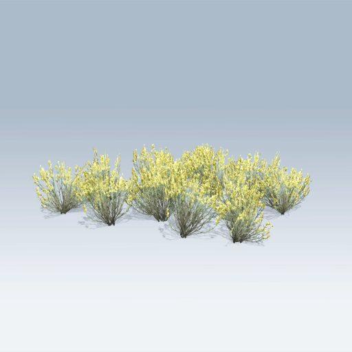 Broom Snakeweed (v6)