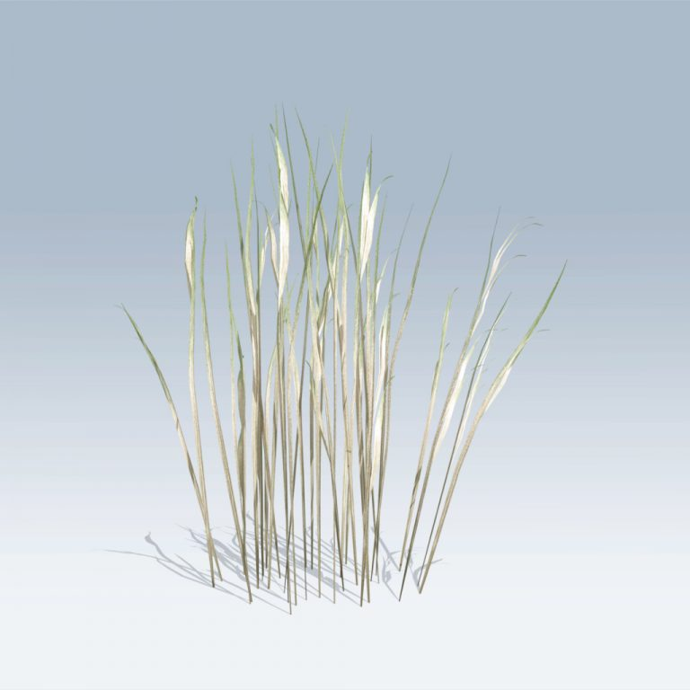 Elephant Grass (v6)