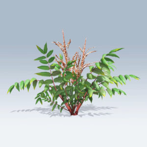 False Spirea Plant (v6)